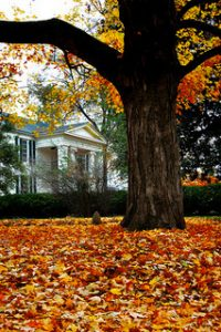 Fall leaves outside a home